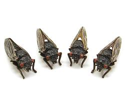 The HEXAPODA Collection - Hemiptera Insect Jewelry