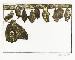 The HEXAPODA Collection - Lepidoptera Insect Prints